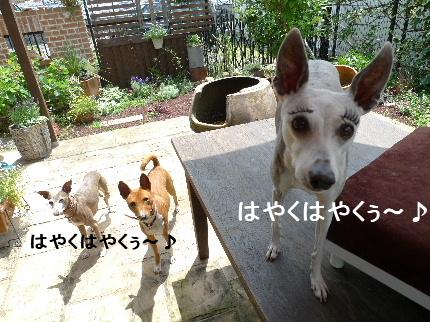 2012_06040068.jpg