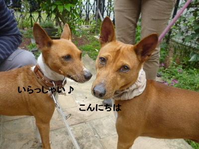 2012_06060010.jpg