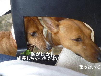 2012_06060081.jpg