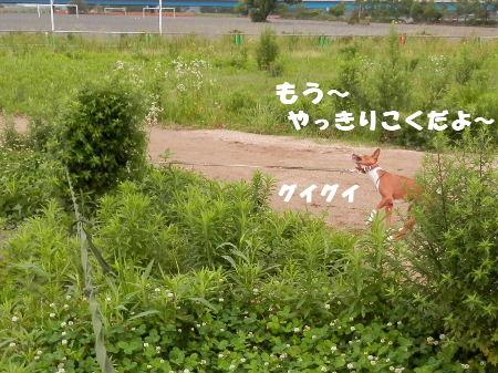 2012_06230025.jpg