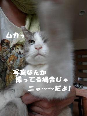 2012_07110096.jpg
