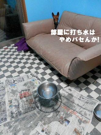 2012_07290014.jpg
