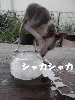 2012_08180022.jpg