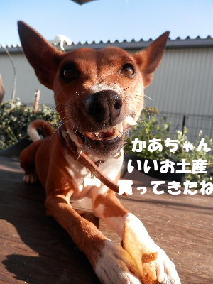 2012_08190022.jpg
