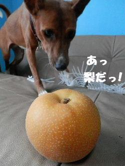 2012_08200011.jpg