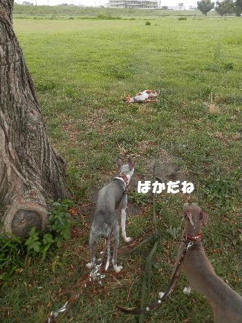 2012_09030009.jpg