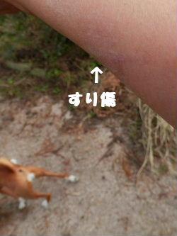 2012_10170041.jpg