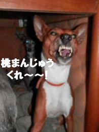 2012_12300010.jpg