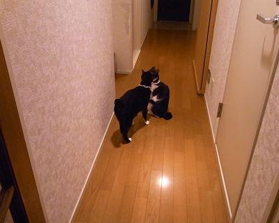 kenizumi4_R_20120522220026.jpg