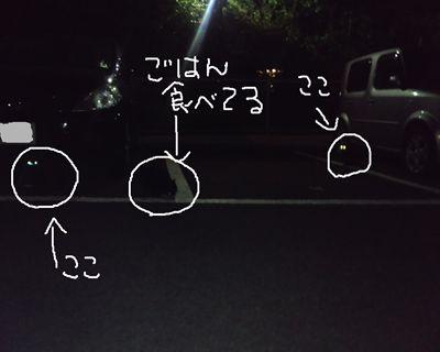 kuro7_R.jpg