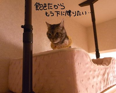 miku38_R.jpg