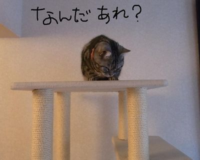 miku49_R_20120612210335.jpg