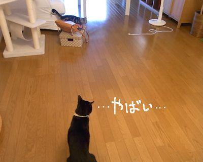 mikuken3_R_20120729101852.jpg