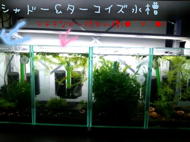 えび2012.10.27 (3)