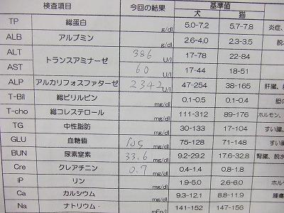 s-DSCF0381_201310120213193e1.jpg
