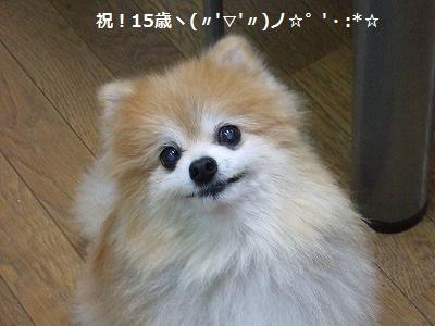 s-DSCF9835.jpg