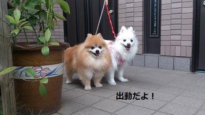 s-DSC_0144.jpg
