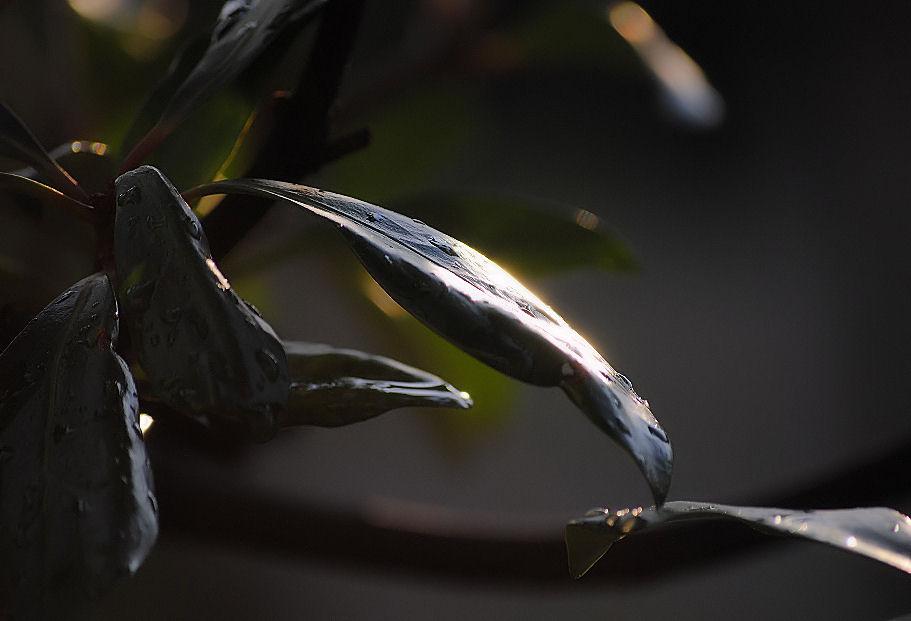 雨上がりの庭にて 撮影 松田光司