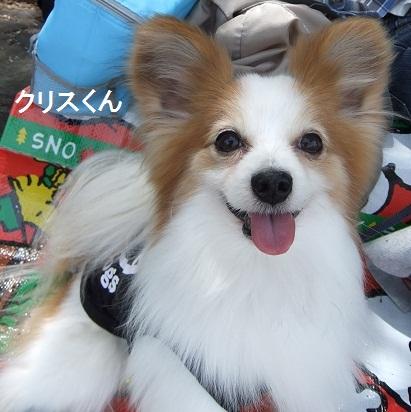 こいのぼり20122