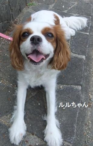 こいのぼり20128