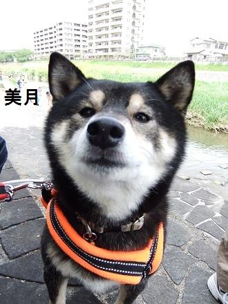 こいのぼり20126