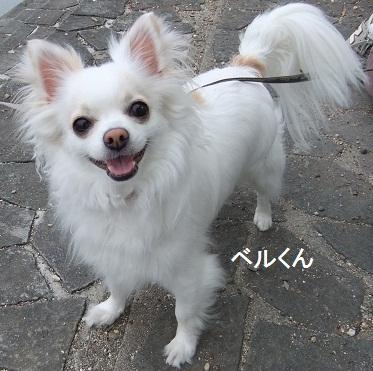 こいのぼり201210