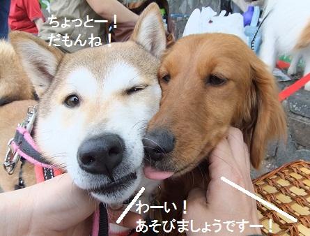 こいのぼり201212