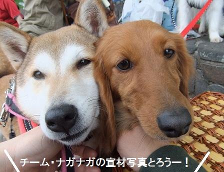こいのぼり201211