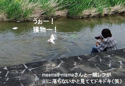 こいのぼり201218