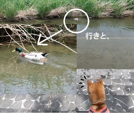 こいのぼり201216