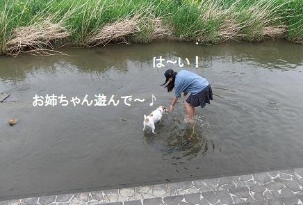 こいのぼり201217