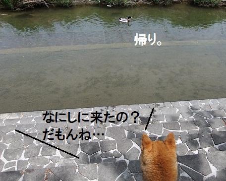 こいのぼり201215