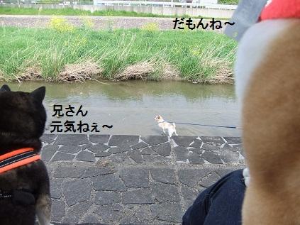 こいのぼり201219