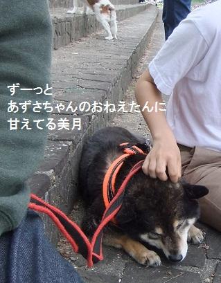 こいのぼり201220