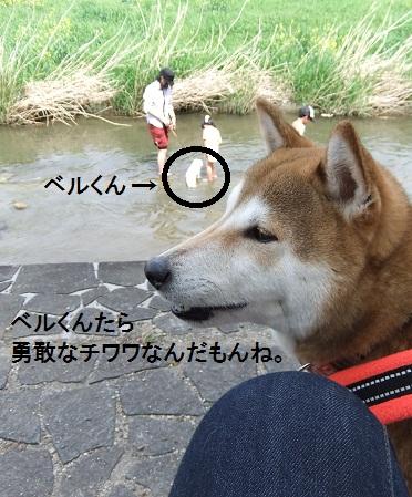 こいのぼり201235