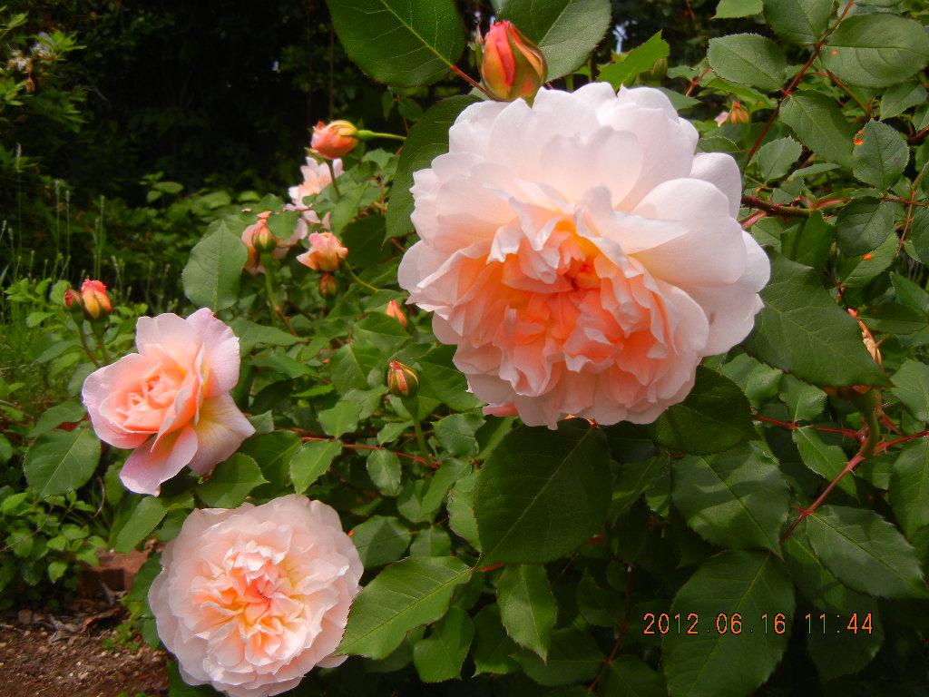 Ausjolly June 2012 _1