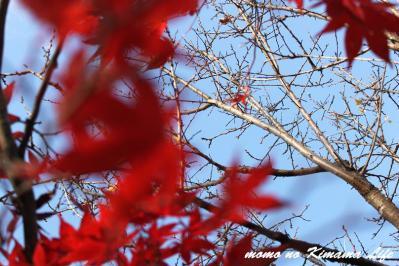 13_20121201220506.jpg