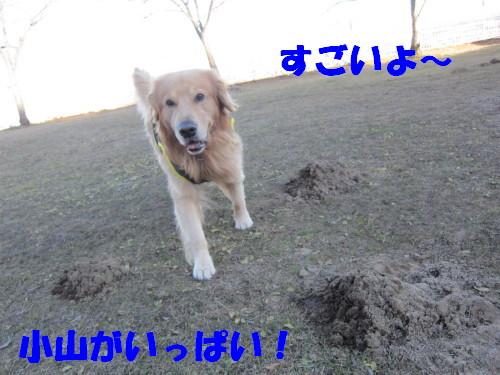IMG_9185.jpg