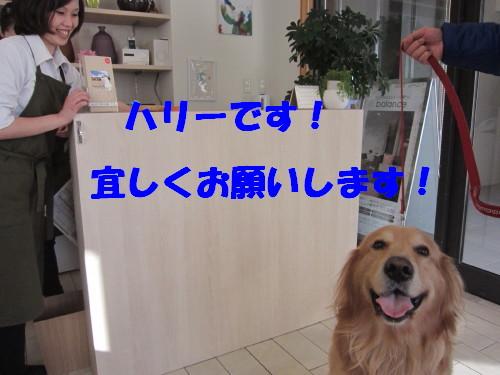 IMG_9349.jpg