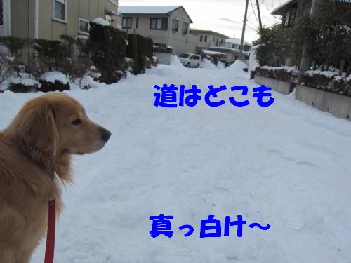 IMG_9488.jpg