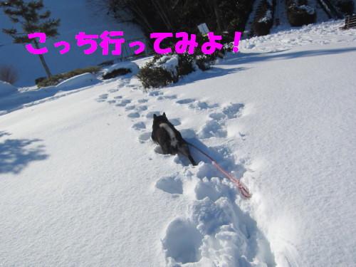 IMG_9508.jpg