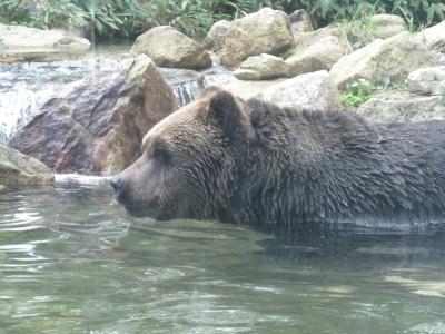北海道12(サホロリゾート 熊)