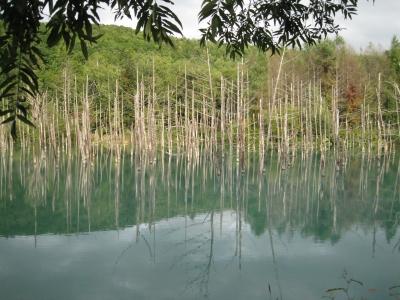 北海道5(青い池)