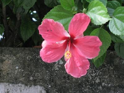 沖縄2-2