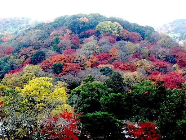嵐山0014b
