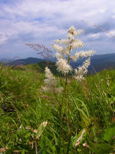 車山高原植物 (2)