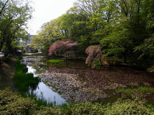 久保田城水堀 (1200x900)