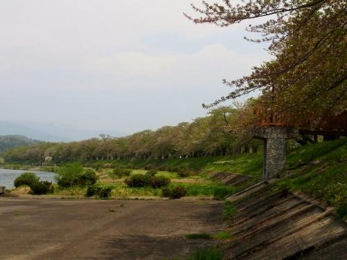 2角館桜並木 (1200x900)