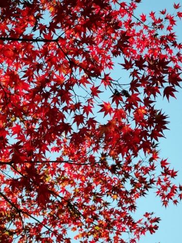 6城峯公園の紅葉 (900x1200)