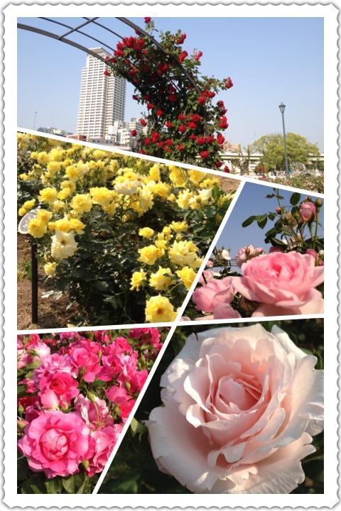IMG_0529_convert_20120516195046.jpg